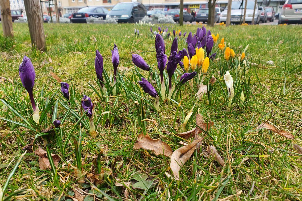 Pierwszy dzień wiosny. Kiedy jest kalendarzowy i astronomiczny początek wiosny?