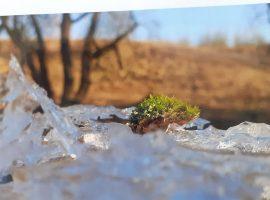 Zimowe Krajobrazy Gołdapi