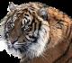 Arka 2.0. W kosmos zostało wysłane DNA zagrożonych gatunków zwierząt.